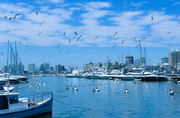 Harbor, boats, seagulls, ocean