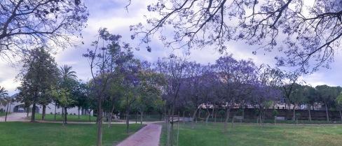 Árbol de Jacaranda